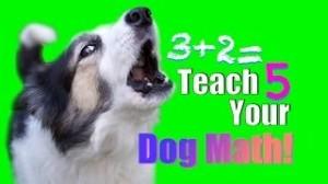 141009 Teach Dog Math