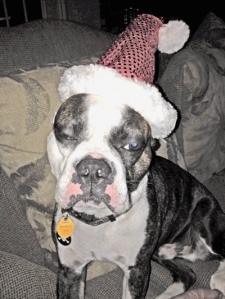 141218 Buster Santa Hat