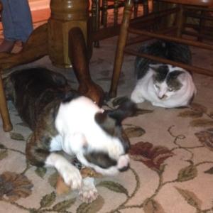 150305 Buster & Maverick