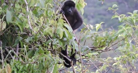 150507 Monkey