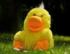 150716 Duck